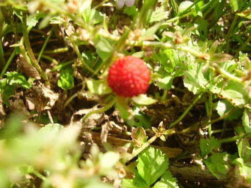 植物2-4