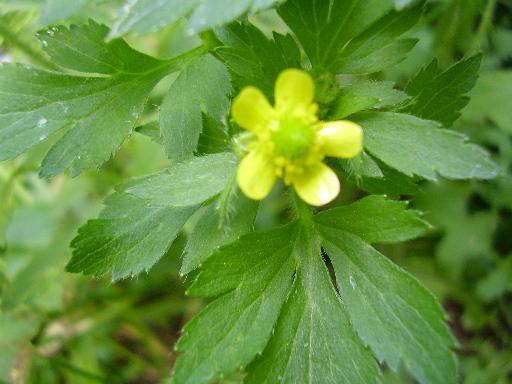 植物2-6