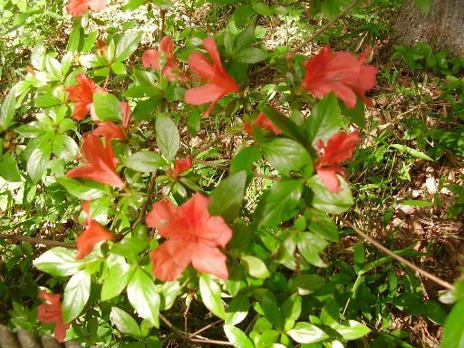 植物3-3
