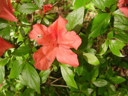 植物3-2