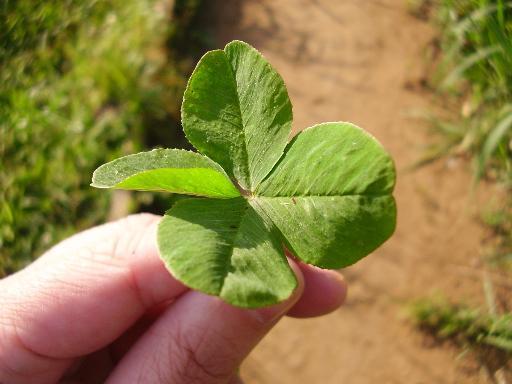 植物3-10