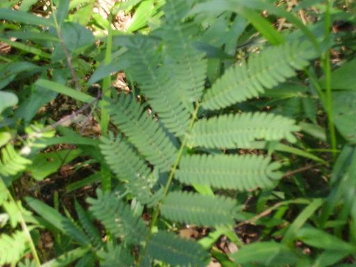 植物14-2