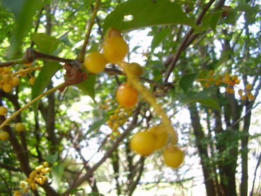 植物15-3