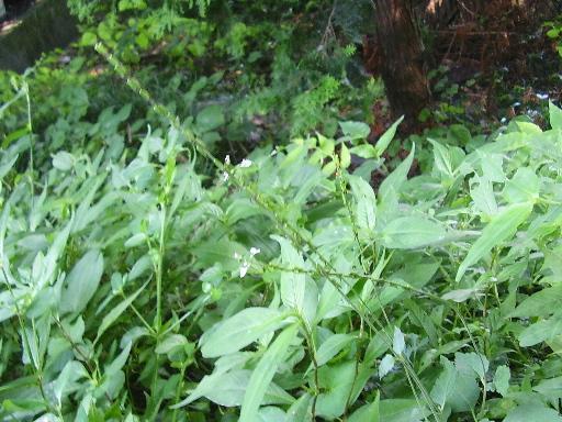 植物15-8