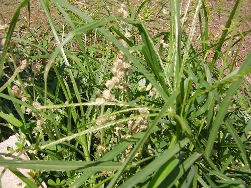 植物15-10