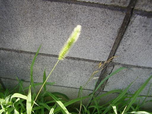 植物15-6