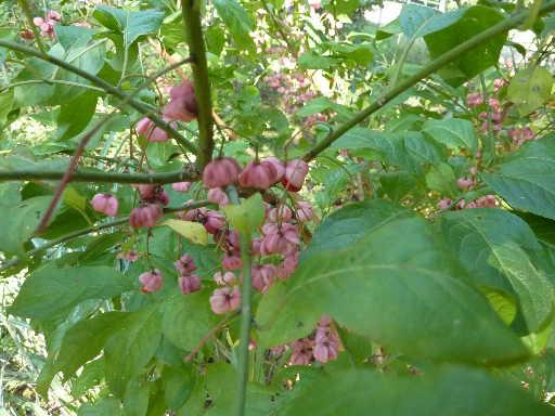 植物19-5