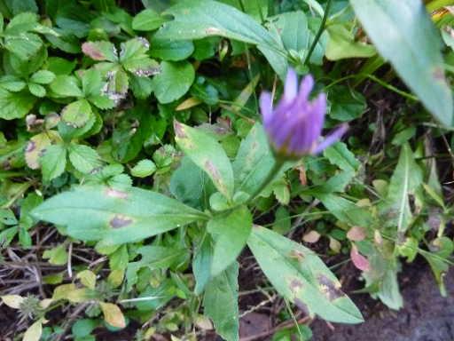 植物19-2