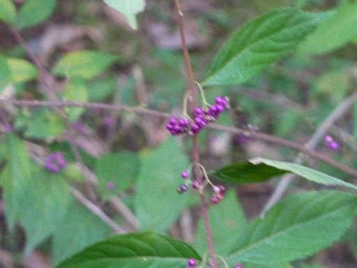 植物19-4