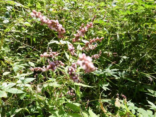 植物19-13