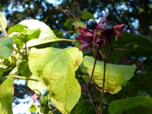 植物19-19