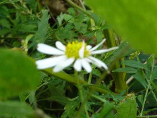 植物20-1