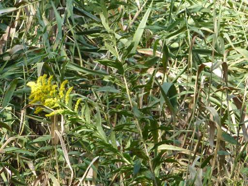 植物20-8