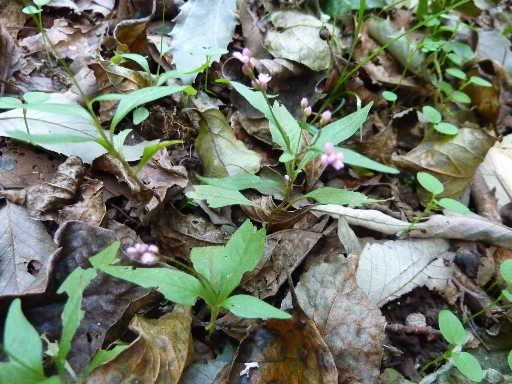 植物20-18