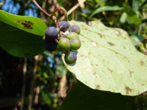 植物21-4