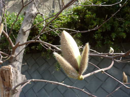 植物34-2