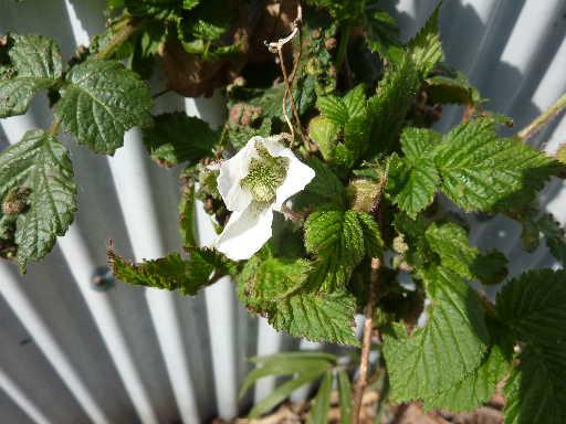 植物34-9