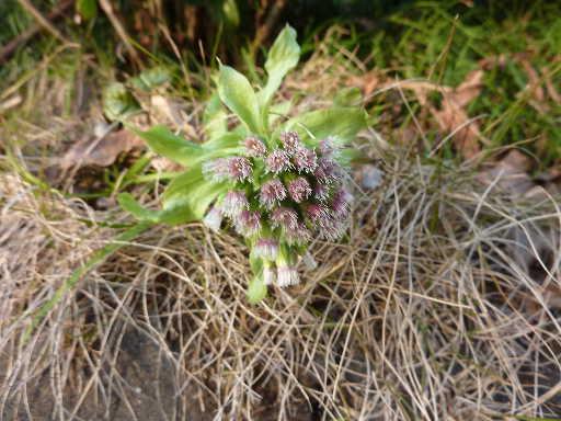 植物34-11