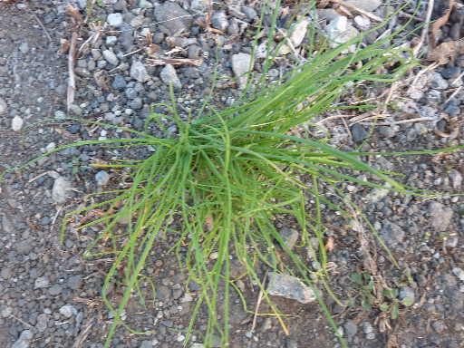 植物34-16