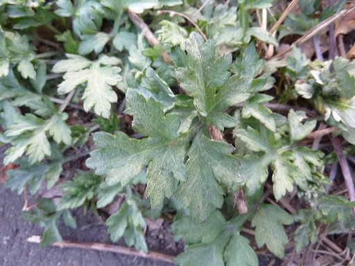 植物34-18
