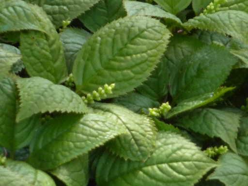 植物44-6