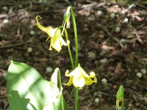 植物44-11
