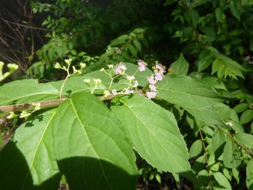 植物56-5