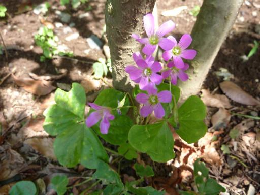 植物56-6