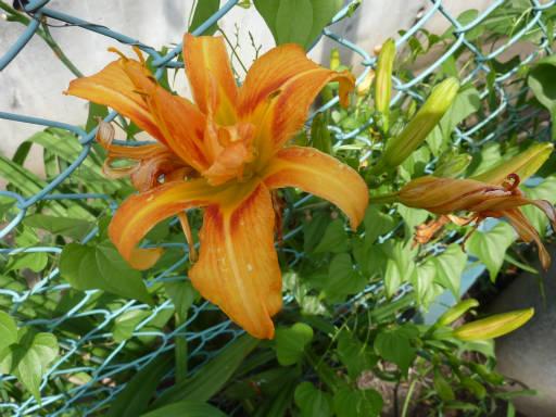 植物56-15