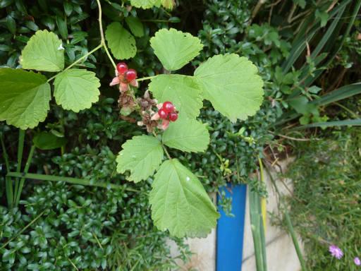 植物56-17