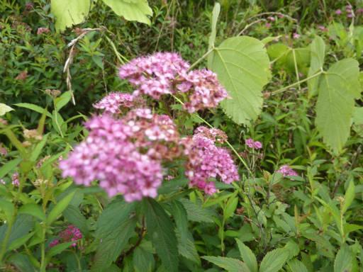 植物57-8