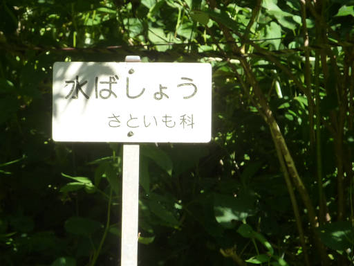 植物59-9