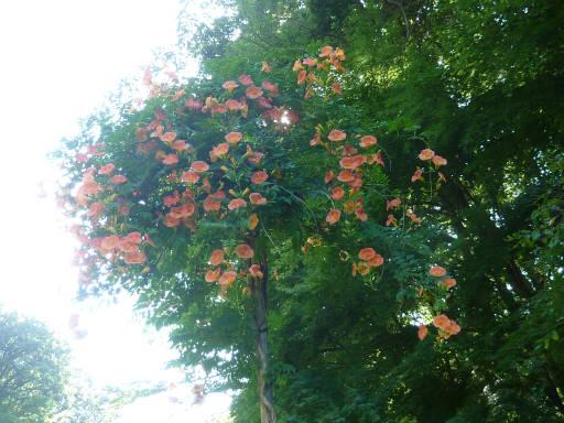 植物59-11