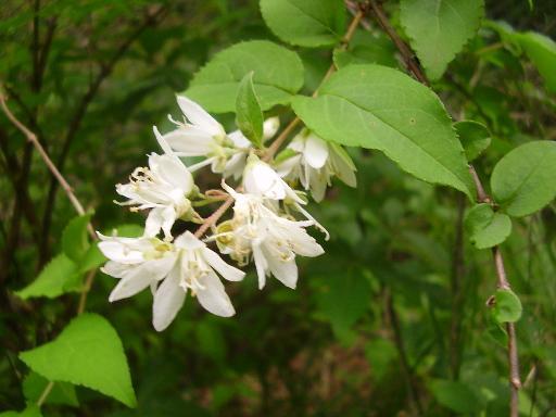 植物68-3