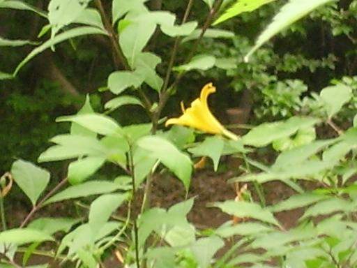 植物68-1