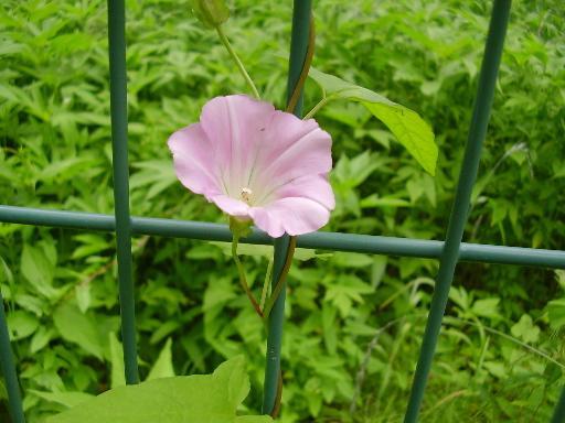 植物68-9