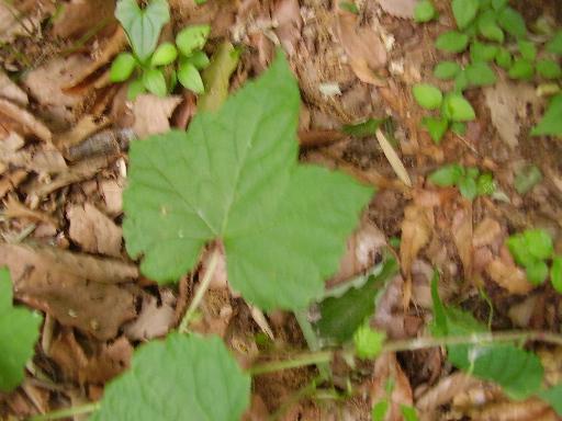 植物68-14