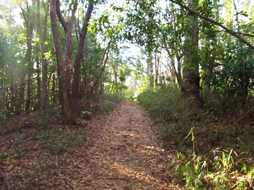 20120209・狭山湖散歩1-10