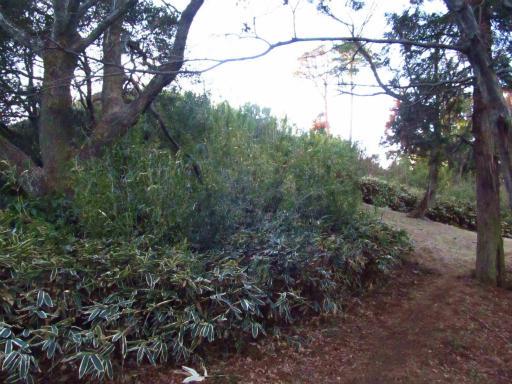 20120209・狭山湖散歩2-09