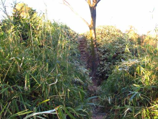 20120209・狭山湖散歩2-18・振り向く