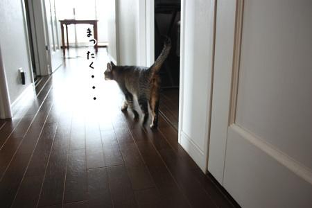 miruraさん、大至急、キッチンまでお越し下さい・・・ってば!