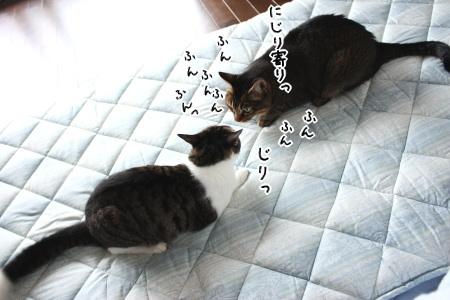 その布団、コロコロで猫毛取るために広げたのに~ by mirura