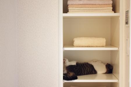 タオル棚に毛皮混入