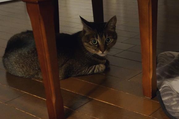 暗がりの、焦げ茶の床の、焦げ茶の猫