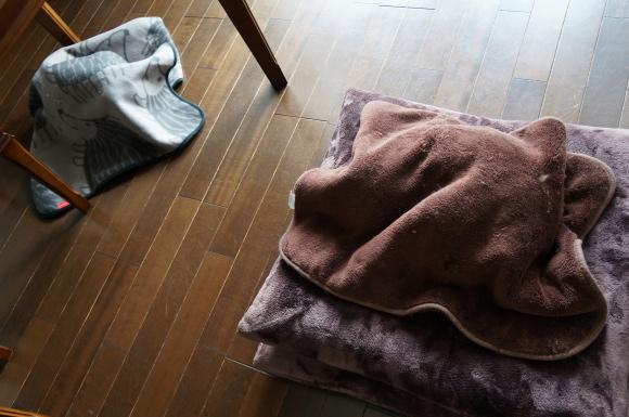 寒さにつき撮影協力お断り。by A&G