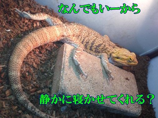 2014112621043451a.jpg