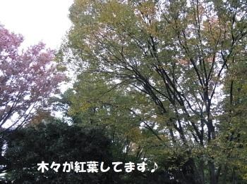 121112-6