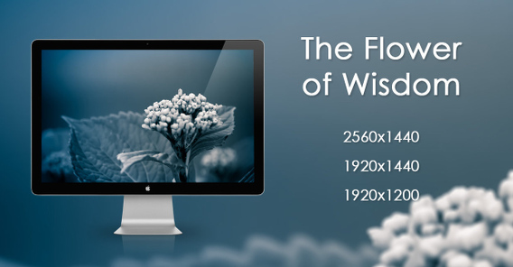 The Flower of Wisdom Ubuntu 壁紙
