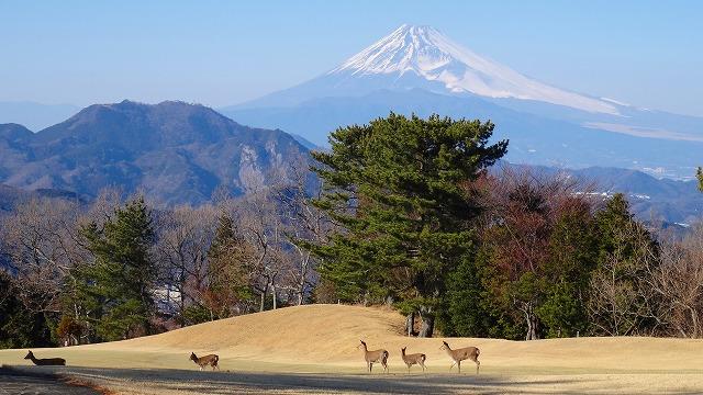 ゴルフ場からの富士山 2